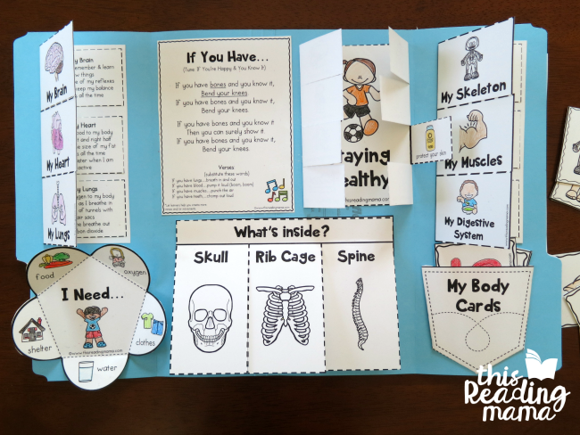 My Human Body Interactive Notebook - This Reading Mama